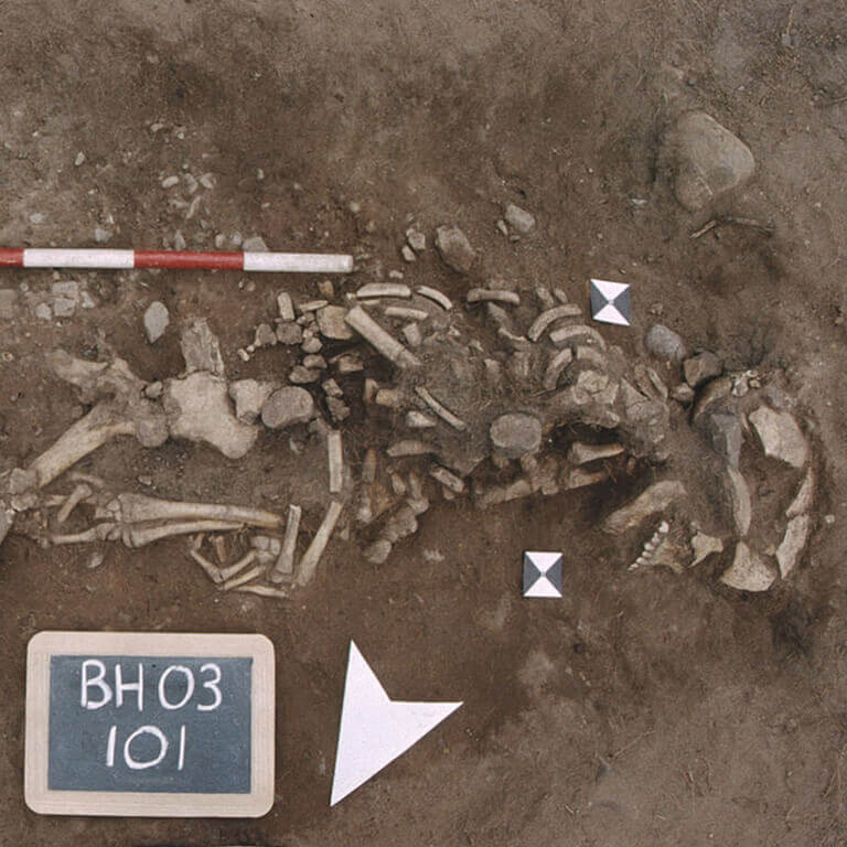 A skeleton with codename burgware as discovered in the bowl hole graveyard
