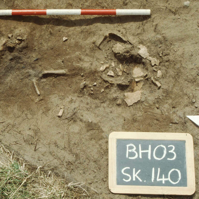 A skeleton with codename cwealm as discovered in the bowl hole graveyard