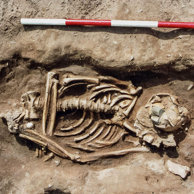 A skeleton with codename Denisc as discovered in the bowl hole graveyard