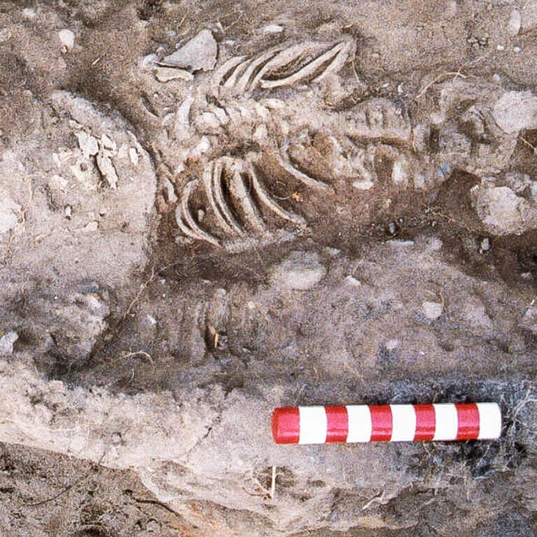 A skeleton with codename Galdor as discovered in the bowl hole graveyard