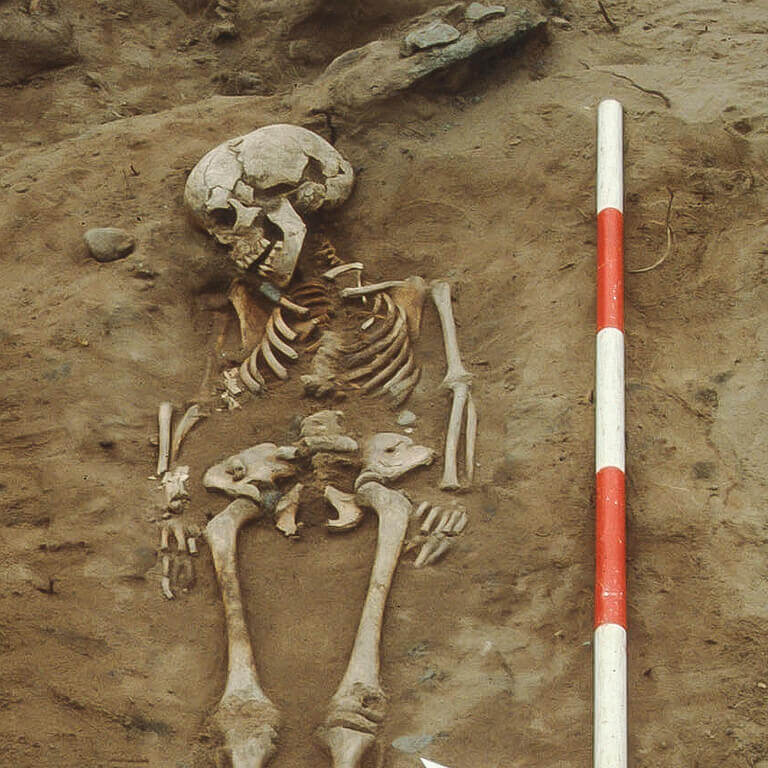 A skeleton with codename Fierd-wīte as discovered in the bowl hole graveyard