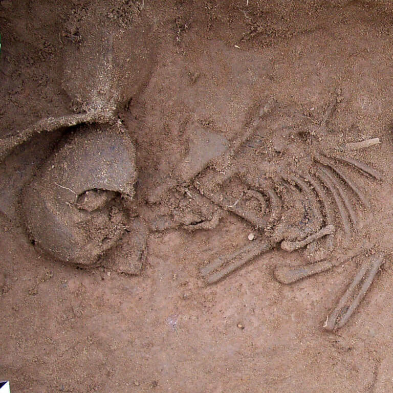 A skeleton with codename Þunor as discovered in the bowl hole graveyard