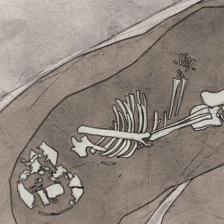 A drawing of skeleton with codename cwēn as discovered in the bowl hole graveyard