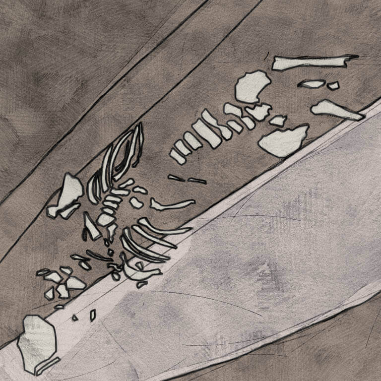 A drawing of skeleton with codename Galdor as discovered in the bowl hole graveyard